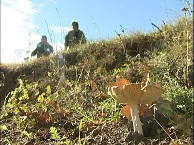Лесные жители, Добровский район. Эфир от 10 октября 2012 года