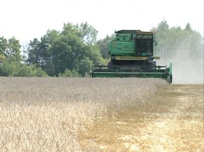 Уборка зерна в Липецкой области
