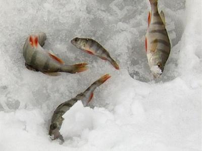 Рыбалка в Добром. Эфир от 14 февраля 2013 года