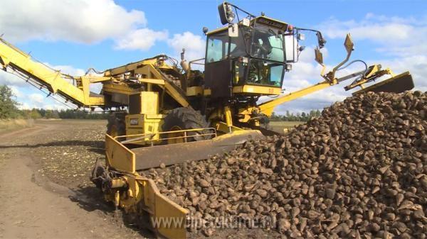 Неменее 4,5 млн тонн сладкой свеклы собрано вЛипецкой области